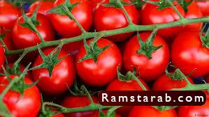 طماطم14