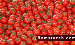 طماطم16