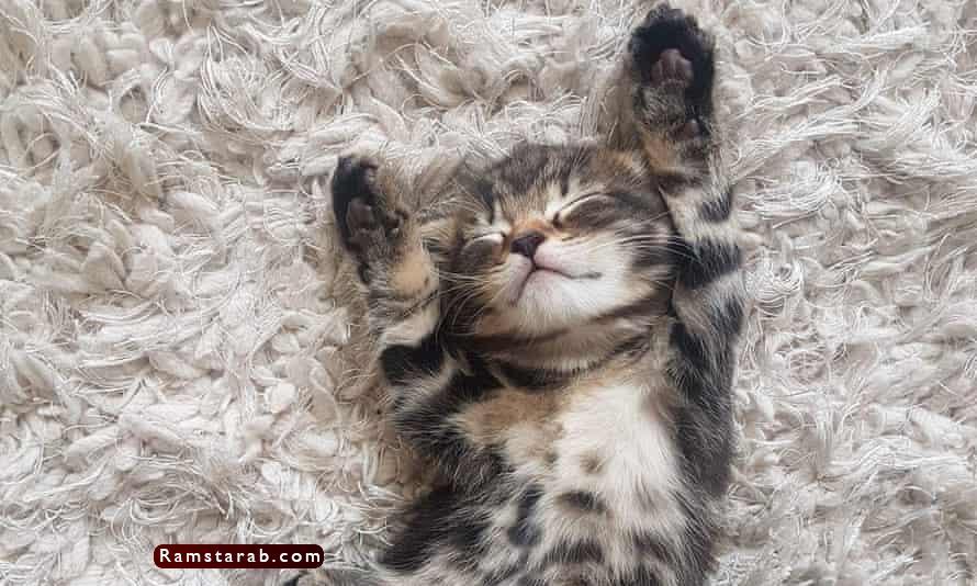 صور قطط كيوت21