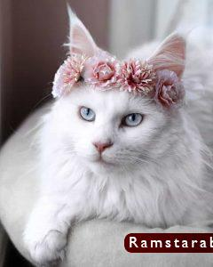 صور قطط كيوت26