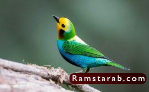 صور طيور24