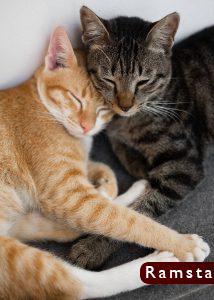 صور قطط كيوت16