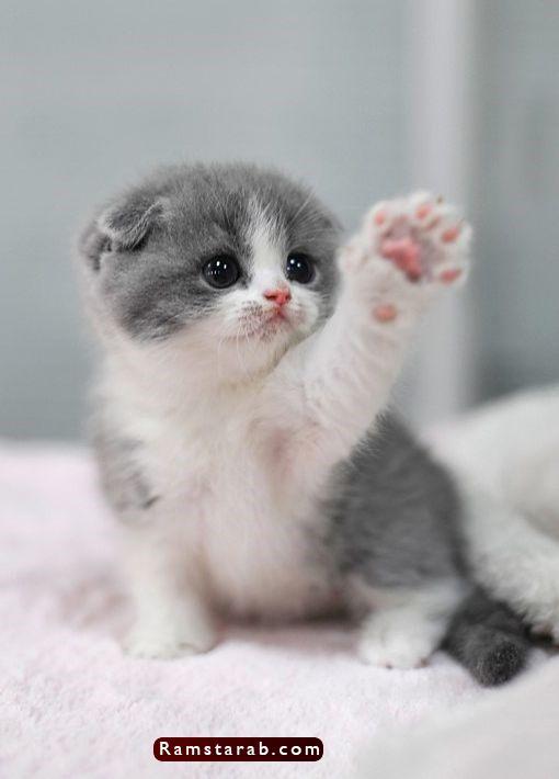 صور قطط كيوت24