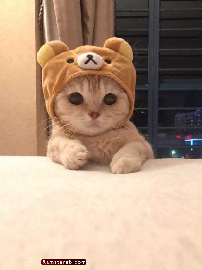 صور قطط كيوت20