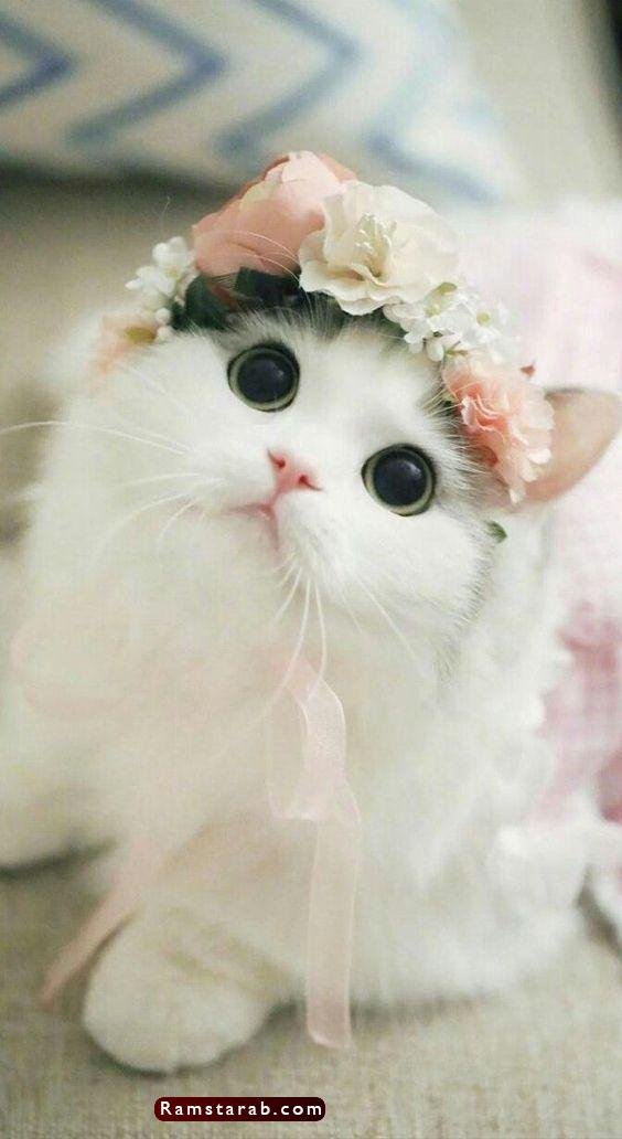صور قطط كيوت25