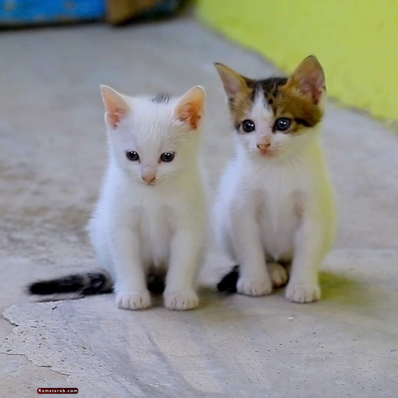 صور قطط كيوت23