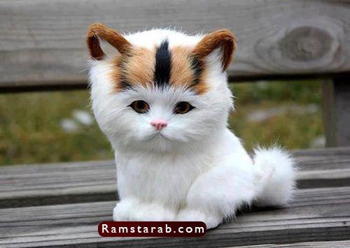 صور قطط كيوت17