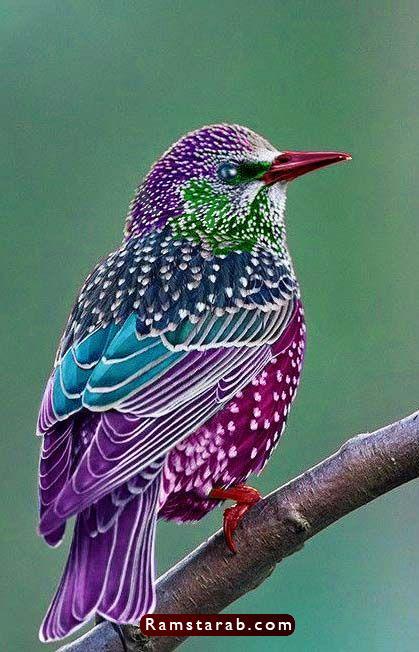 صور طيور26