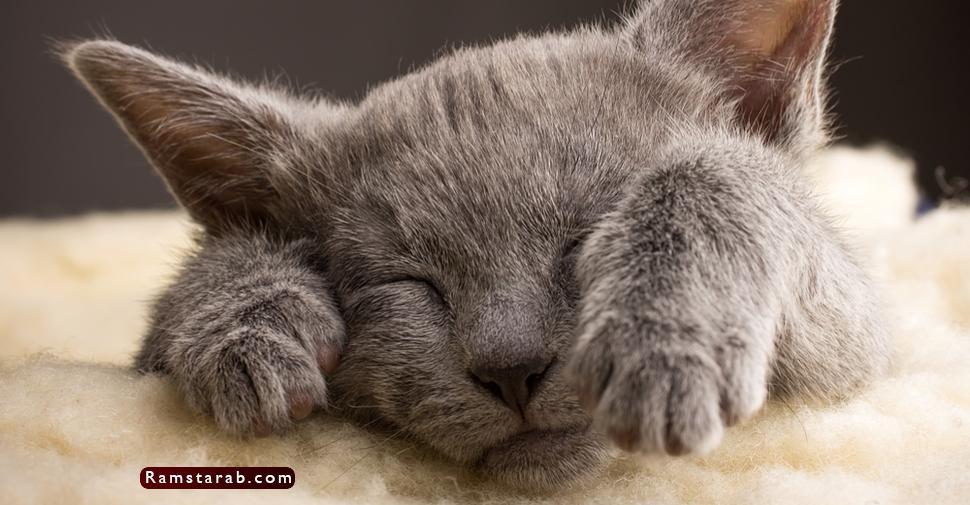 صور قطط كيوت4