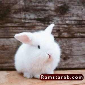 صور ارنب2