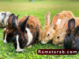 صور ارنب29