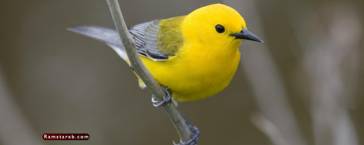 صور طيور22