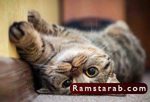 صور قطط كيوت19