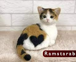 صور قطط كيوت15