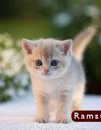صور قطط كيوت14