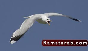 صور طيور14