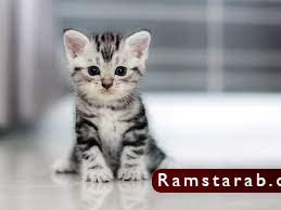 صور قطط كيوت12