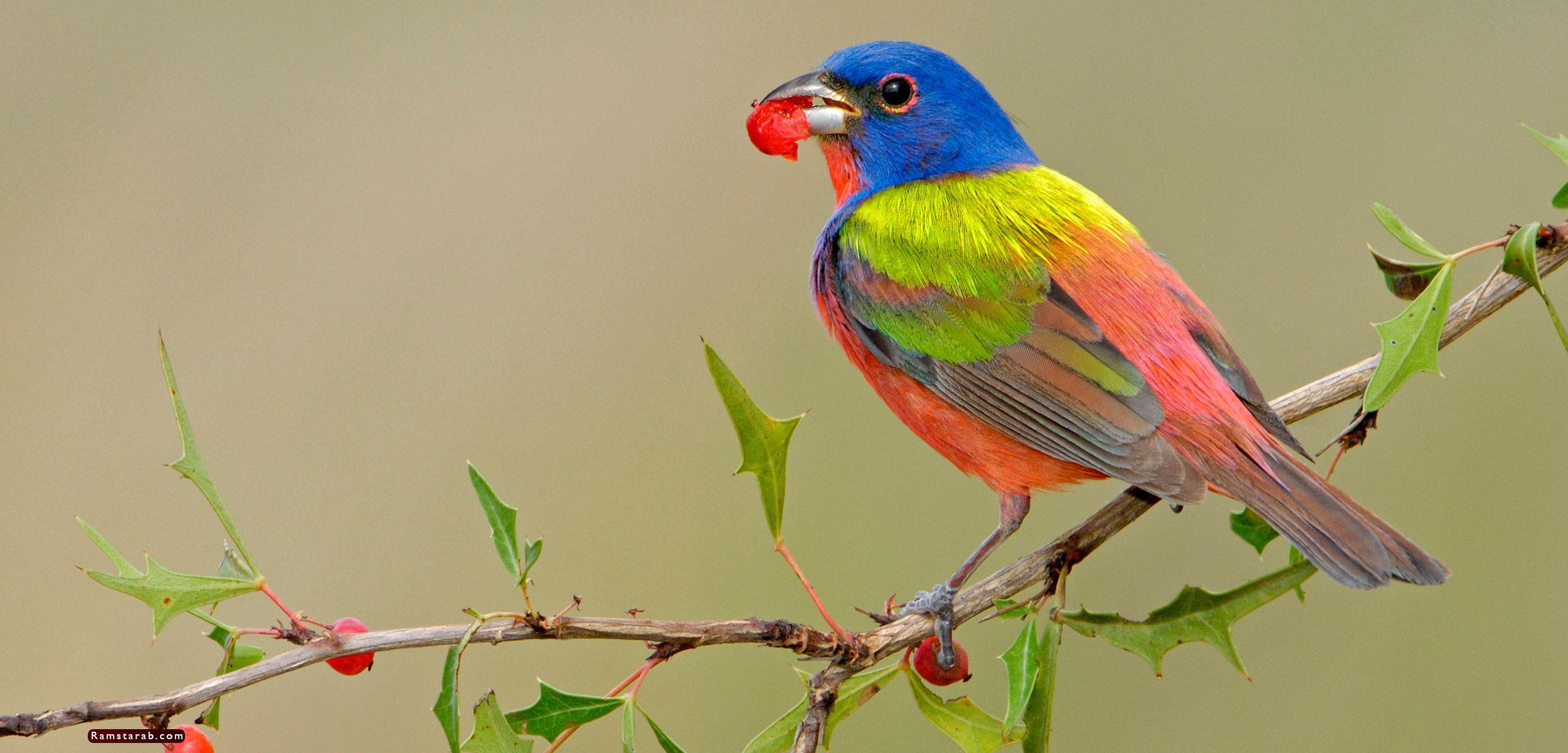 صور طيور10