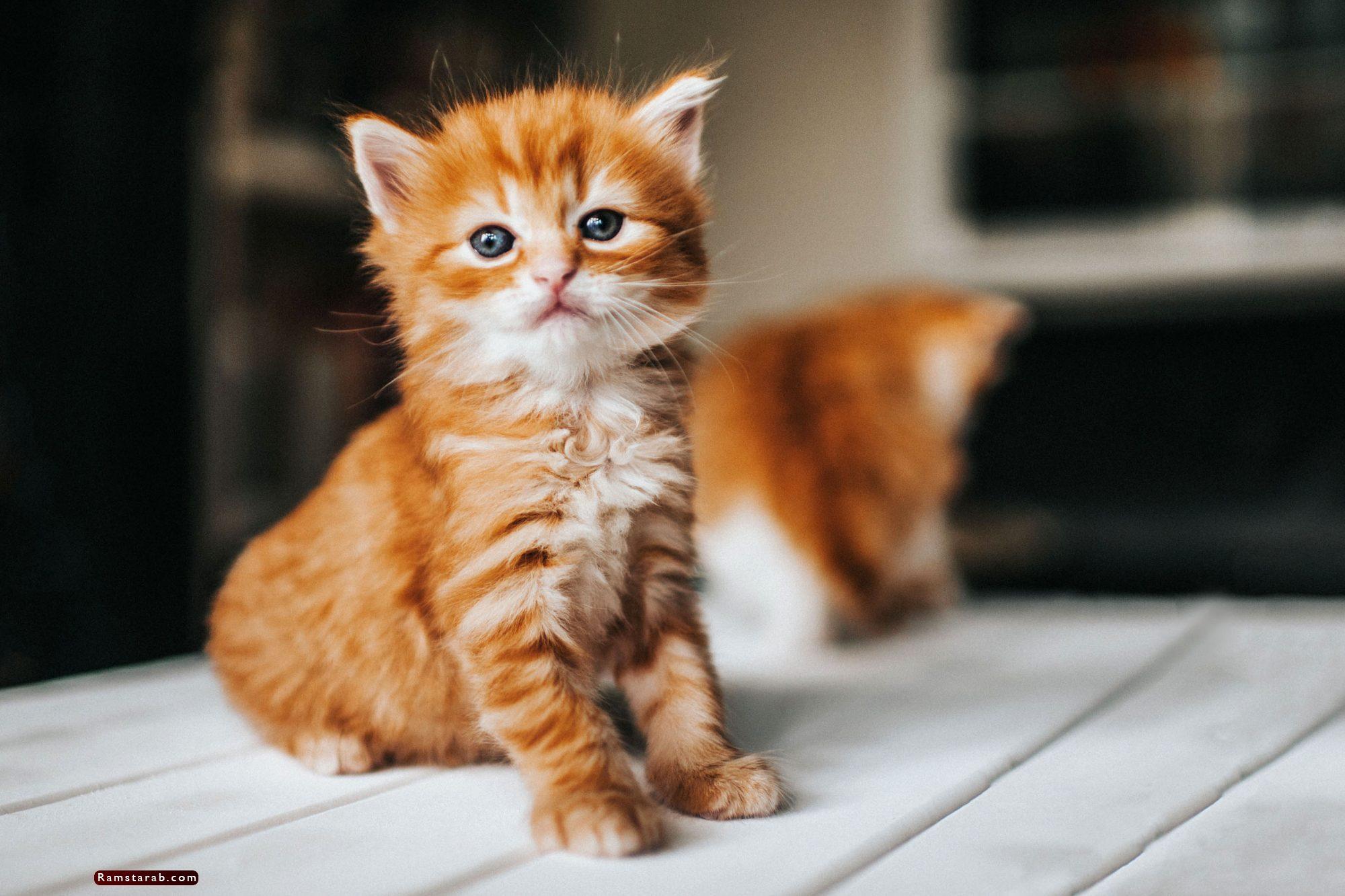 صور قطط كيوت11