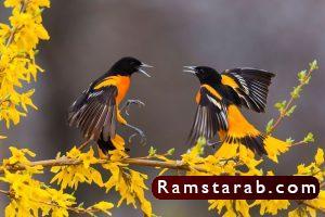 صور طيور4