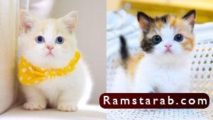 صور قطط كيوت8