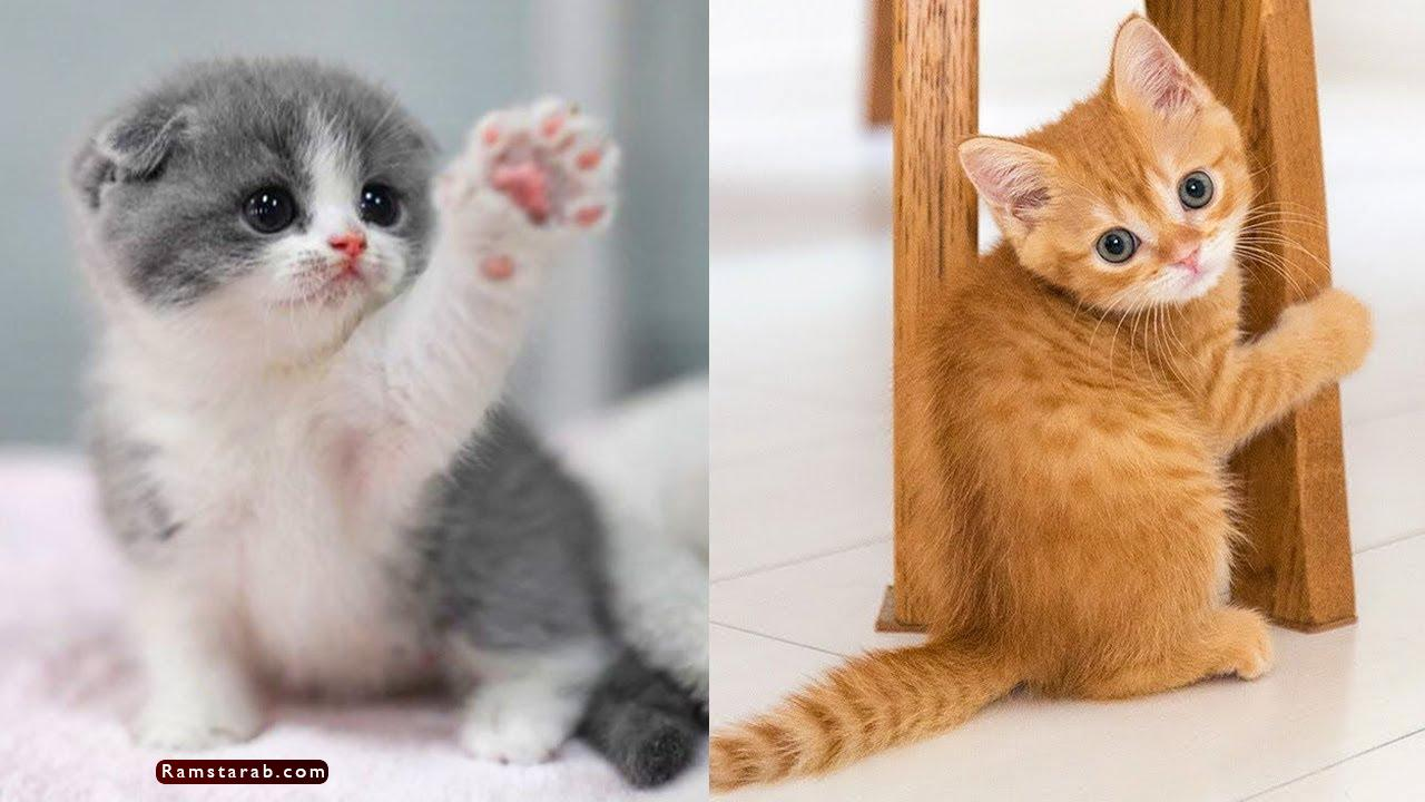 صور قطط كيوت9