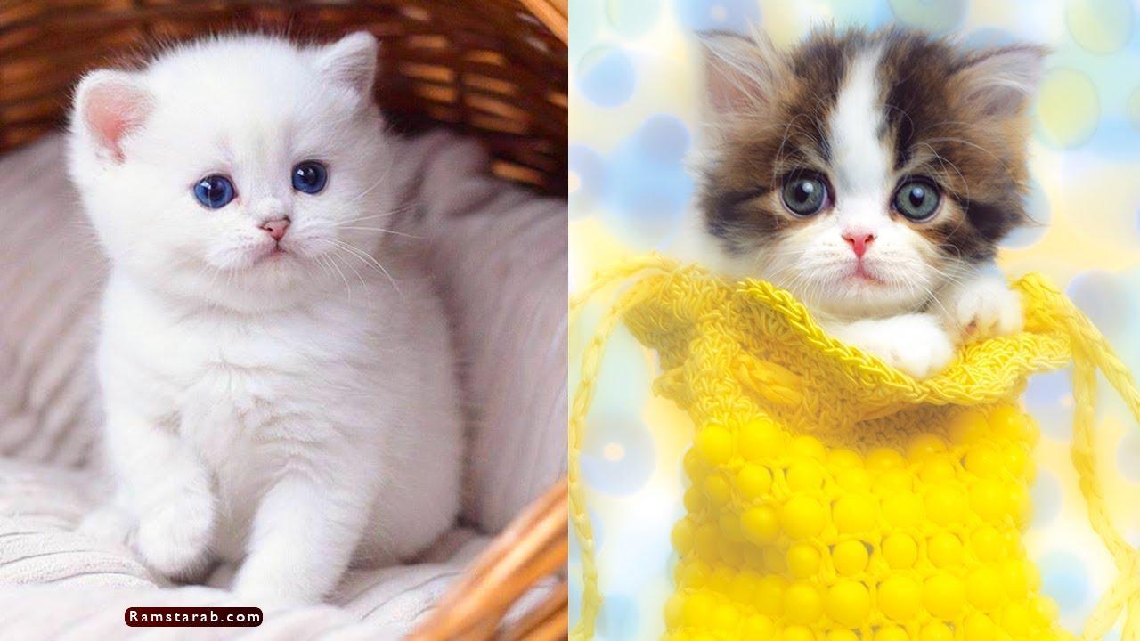 صور قطط كيوت10