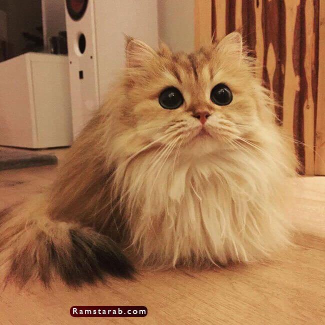 صور قطط كيوت2